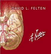 Netter Flashcards de Neurociencia 3ed - Felten